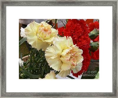 Carnation 3 Framed Print by Padamvir Singh