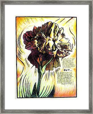 Carnation Framed Print by Daniel Jimick