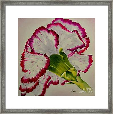Carnation Framed Print by Mary Deal