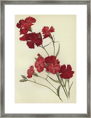 Carnations Framed Print by English School