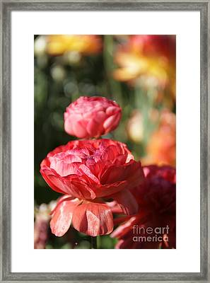 Carnival Of Flowers 01 Framed Print by Andrea Jean
