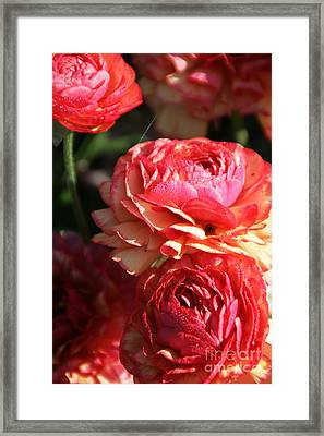Carnival Of Flowers 02 Framed Print by Andrea Jean