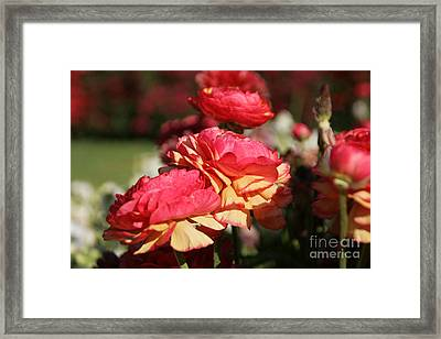Carnival Of Flowers 03 Framed Print by Andrea Jean