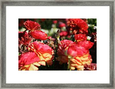 Carnival Of Flowers 04 Framed Print by Andrea Jean