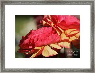 Carnival Of Flowers 05 Framed Print by Andrea Jean