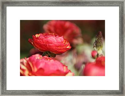 Carnival Of Flowers 06 Framed Print by Andrea Jean