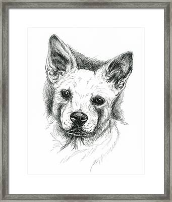 Carolina Dog Charcoal Portrait Framed Print