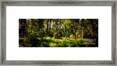 Carolina Forest Framed Print