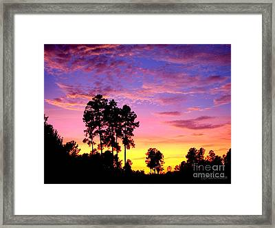 Carolina Pine Sunset Framed Print