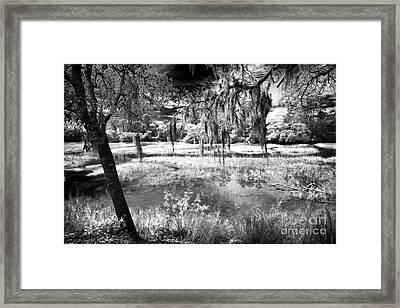 Carolina Swamp Framed Print by John Rizzuto