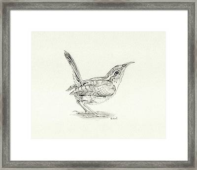 Carolina Wren Framed Print by Belinda Keal