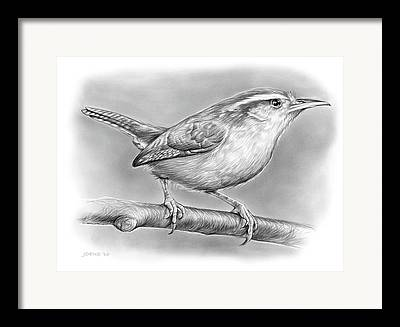 Carolina Wren Drawings Framed Prints
