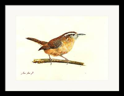Carolina Wren Framed Prints