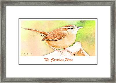 Carolina Wren, Winter Wren Framed Print by A Gurmankin