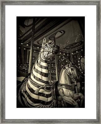 Carousel Zebra Framed Print by Caitlyn Grasso