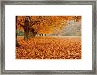 March Of The Maples Framed Print by Butch Lombardi