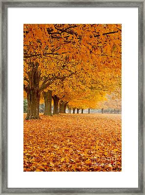 Carpet Of Gold II Framed Print by Butch Lombardi