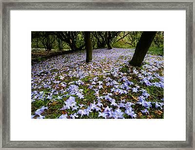 Carpet Of Petals Framed Print