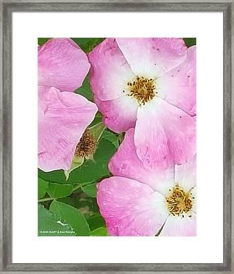 Carpet Of Pink Framed Print