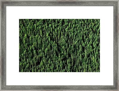 Carpet Of Trees Framed Print by Todd Klassy