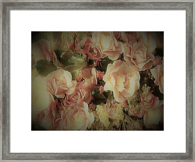 Carpet Rose Framed Print