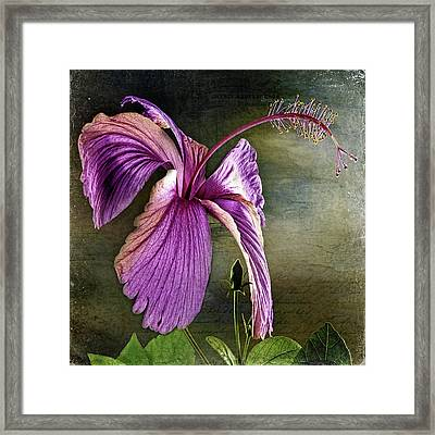 Framed Print featuring the photograph Caressed By The Light by Bellesouth Studio