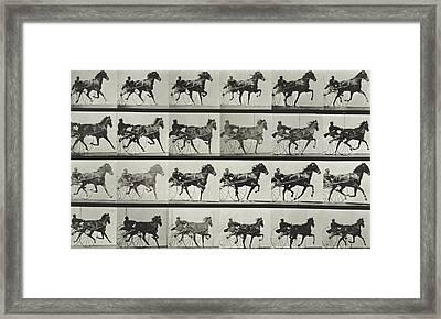 Carriage Driving Framed Print by Eadweard Muybridge