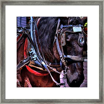 Carriage Horse Framed Print by David Patterson