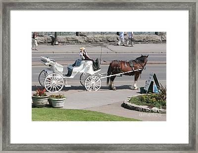 Carriage Horse Ride  Framed Print by Chuck Kuhn