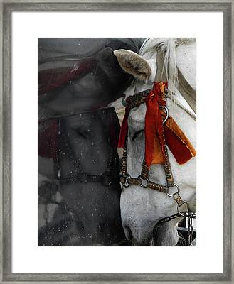 Carriage Horse Framed Print by Tianxin Zheng