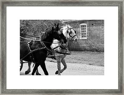 Carriage Horses Framed Print