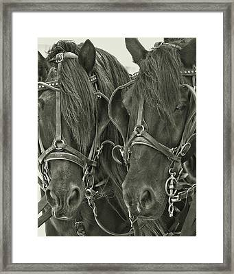 Paired Carriage Ponies Framed Print by JAMART Photography