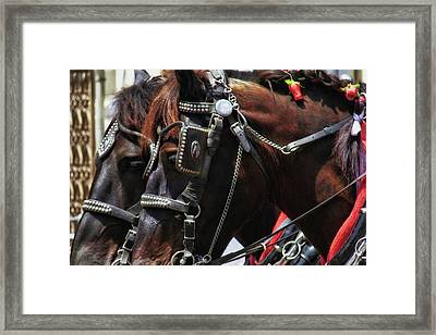 Carriage Tour Framed Print by Dressage Design