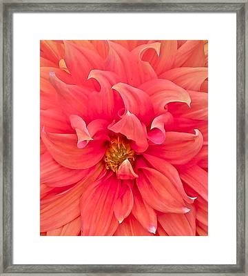 Carrie's Sister Framed Print by Gwyn Newcombe