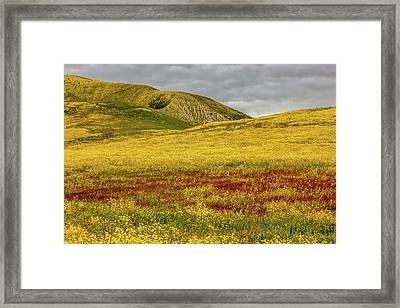 Framed Print featuring the photograph Carrizo  Plain Super Bloom 2017 by Peter Tellone