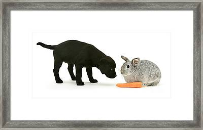 Framed Print featuring the photograph Carrots Are For Pups, Too by Warren Photographic