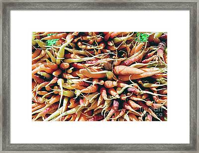 Carrots Framed Print by Ian MacDonald