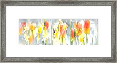 Framed Print featuring the photograph Carrusel De Primavera by Alfonso Garcia