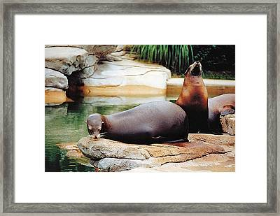 Carry That Weight Framed Print by Jan Amiss Photography