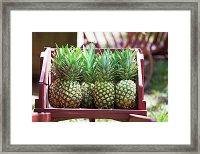Cart Of Pineapples Framed Print by Walt Stoneburner