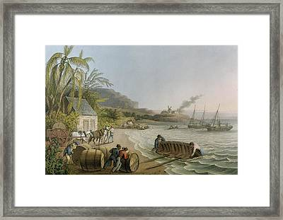 Carting And Putting Sugar Hogsheads On Board Framed Print by William Clark