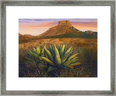 Casa Grande Butte With Agave Framed Print by Tim Fitzharris