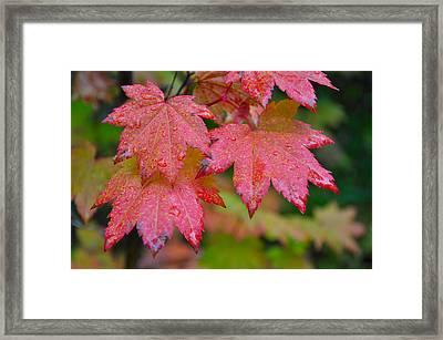 Cascade Autumn Leafs 5 Framed Print by Noah Cole