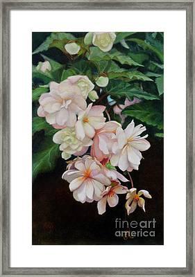Cascade Of Begonias  Framed Print