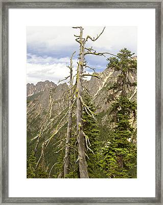 Cascades Tree Framed Print by Peter J Sucy