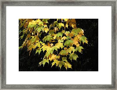 Framed Print featuring the photograph Cascading Leaves by Doris Potter