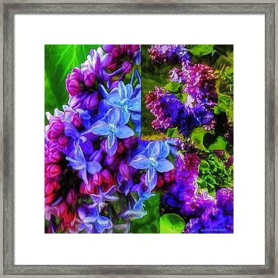 Cascading Lilacs Framed Print by Jo-Anne Gazo-McKim
