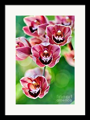 Pretty Orchid Framed Prints