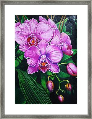 Cascading Orchids Framed Print by Bruce Bley