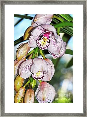 Cascading White Orchids By Kaye Menner Framed Print by Kaye Menner